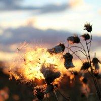 Sunset :: Anton Semykin