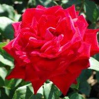 краса цветов :: Дмитрий Яшин
