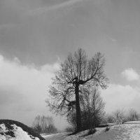Ранняя весна :: Анна Фабульян