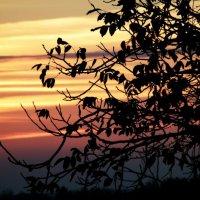 На закате дня, в тихое предвечерние. :: Ксения Куривчак