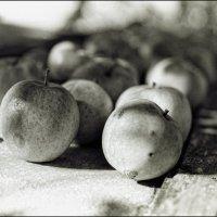 Яблочки молодильные :: Alexander Reiz