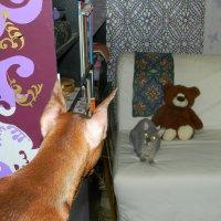 у кота Матроскина недоброжелательный гость( малыш пинчер) :: Надежда