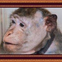 Забавная обезьянка :: Виктор Филиппов