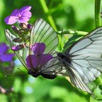 бабочки :: vg154