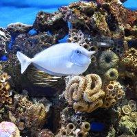 Носастая рыба :: Marina Timoveewa