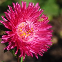 цветок и поклонник :: Валерия Шамсутдинова