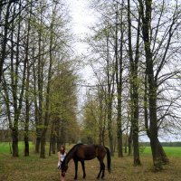 Девушка и Лошадь :: Яна Мелех