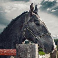 Конь :: Артём Завьялов