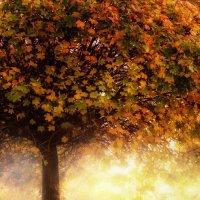 под деревом :: Абу Асиялов