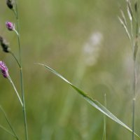 Летние травы..... :: Валерия  Полещикова