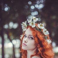 Titania :: Kate Kosh