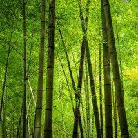 бамбук :: Slava Hamamoto
