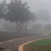 Утренний Туман :: Aleks Ben Israel