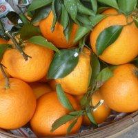 Апельсины. :: Чария Зоя