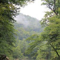 Природа Кавказа :: Елена Серопегина