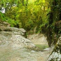 Абхазия. Зелёное ущелье. :: Александр Тарута