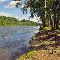 Тополя у реки :: Любовь Потеряхина