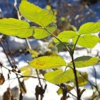 Зима в лесу :: Галина Стрельченя