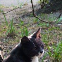 Кошачий портрет :: Артем Никитенко