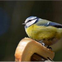 угощение в лесу :: linnud