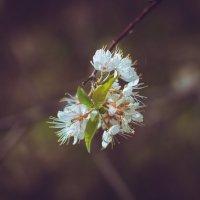 Весна :: Артём Аристов