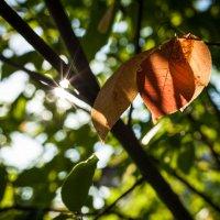 Тёплый свет сквозь ветви льётся, нежно листьев он коснётся . . . :: Константин Фролов