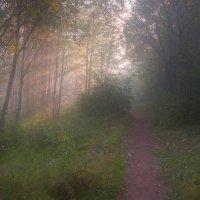 Луч солнца золотого... :: Владимир Комышев