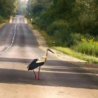 ...пешеход... :: Галина Юняева
