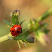 из жизни насекомых :: Саша Ш.