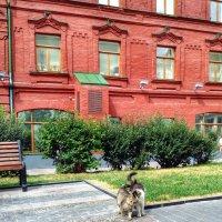 Московские котики, живут возле Красной площади :: Ирина Бирюкова