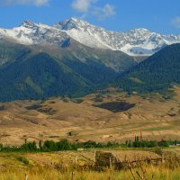 Тянь-Шань  Киргизия :: Рыжик