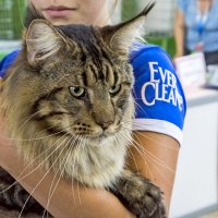Выставка кошек. 23.08.2014 :: Николай Тегин