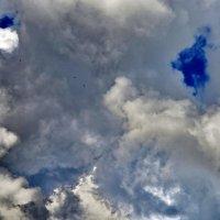 Птицы перед дождём :: Николай Варламов