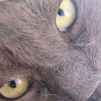 Такой злой кот :: Екатерина ...
