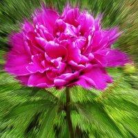 Весенняя красота! :: Златислава Злобина