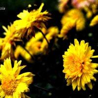 Цветы :: Анастасия Фокс