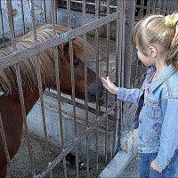 Самая любимая лошадка :: Нина Корешкова