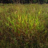 Пучок травы, освещенный солнцем IMG_6743 :: Андрей Лукьянов
