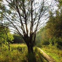 Конец августа в парке IMG_6822 :: Андрей Лукьянов