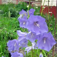 Городские цветы :: Ольга