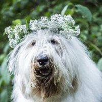красавица :: Лариса Батурова