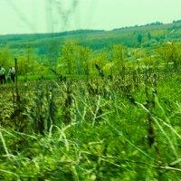 Через поля :: Катя Мохова