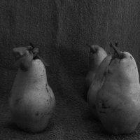 из жизни груш :: Ирина Рыкина