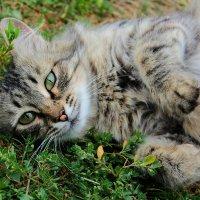 Кошка-королева :: Кэтрин Ли