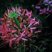 Цветок :: Viacheslav Birukov
