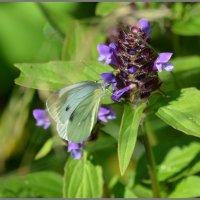 Найдите бабочку)) :: Мария Соколова