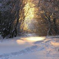 Зима...Закат... :: Ольга Степанова
