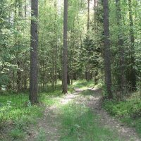 майский лес :: Евгения Куприянова