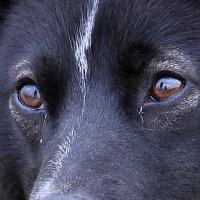 Собака :: Алексей Сухолейстер