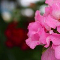 Розовое настроение! :: Sonya Kozlova